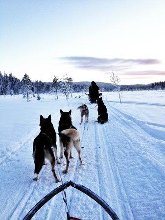Fell Trek Rauhala: gita husky