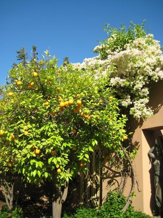 Dar Ayniwen Villa Hotel: jardin