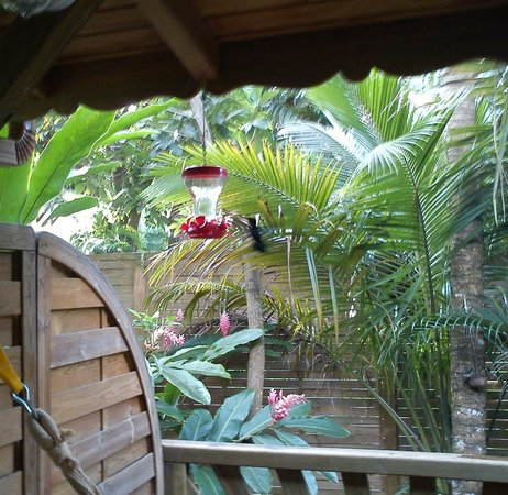 G te vert picture of au jardin des colibris deshaies for Au jardin des colibris deshaies guadeloupe