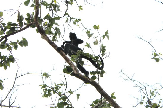 Ecological Jungle Trips: Monkeys Family.