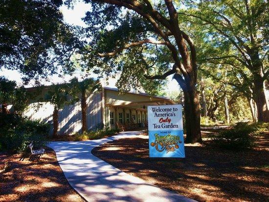 Charleston Tea Plantation 사진