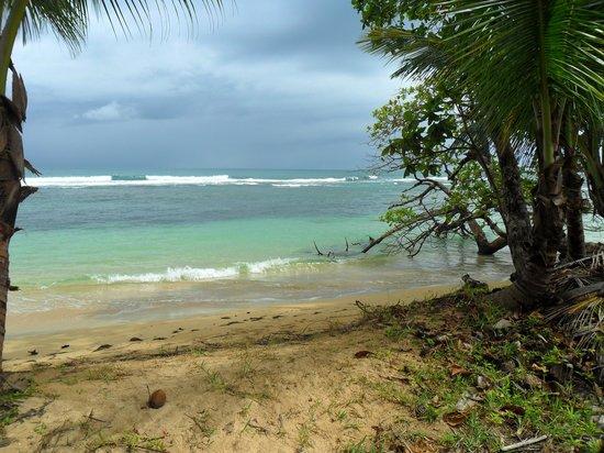 Al Natural Resort: playa de isla bastimentos