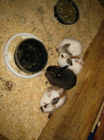 The Inn at East Hill Farm:                   Bunnies!