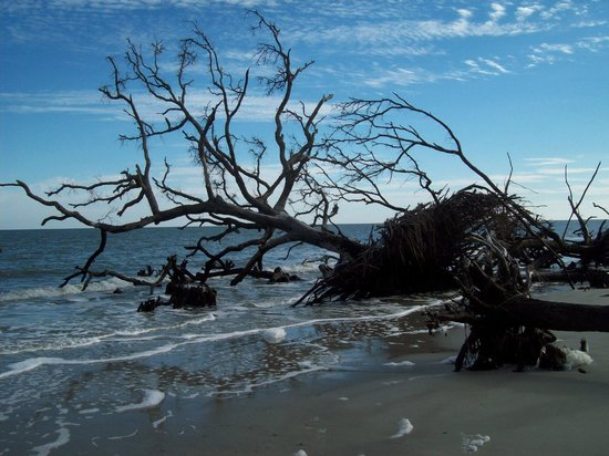 Hunting Island State Park:                   Beach in transition.