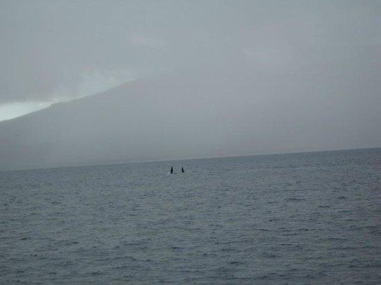 Hawaii Ocean Project:                   Two waving at us