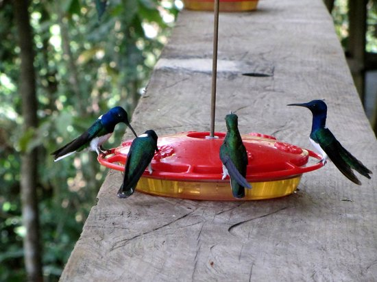 Foto de Gamboa Rainforest Resort Guided Bird-Watching Tour
