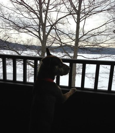 Church Landing at Mill Falls:                   Our dog Juno checking out the lake 1st thing in the morning
