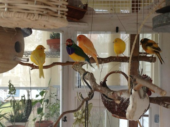 Mansion District Inn Bed & Breakfast :                   Gathering of sweet birds in aviary off dining room.  Wonderful canary serenade