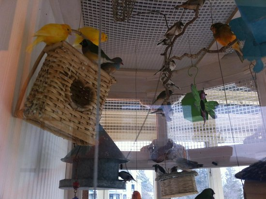Mansion District Inn Bed & Breakfast :                   Another view of aviary.  Notice complete with nesting spots.  Usually babes in