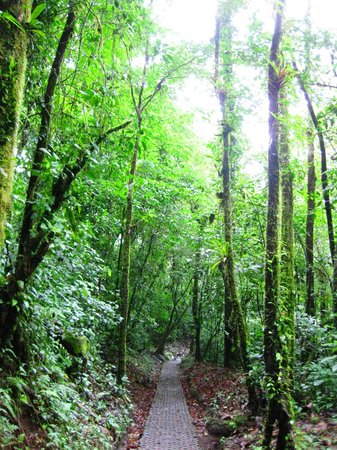 Arenal Observatory Lodge & Spa: Cerro Chato Hike