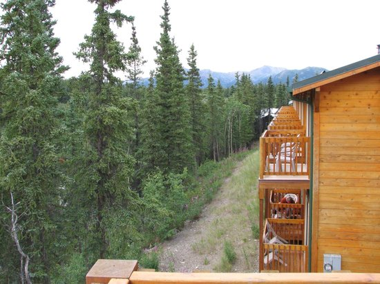 Denali Grizzly Bear Cabins & Campground : Good but too pricey!!