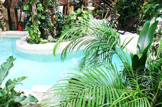 Hotel Playa del Karma: Pool & garden