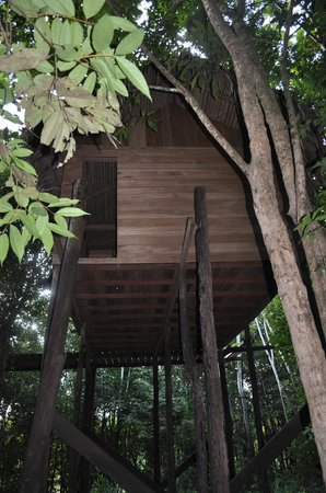 Dolphin Lodge:                   Tree house where you can fish in the flooded forest