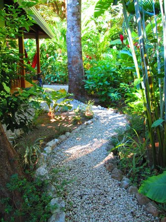 El Pequeno Gecko Verde:                   Path to our bungalow