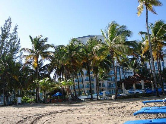 The Ritz-Carlton, San Juan: Reposeras/hamacas para huéspedes