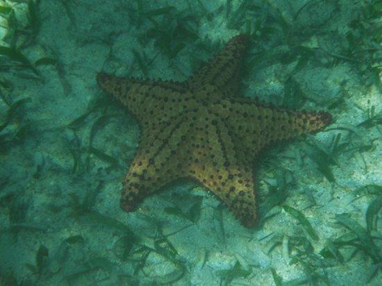 Snake Cayes: SeaStar