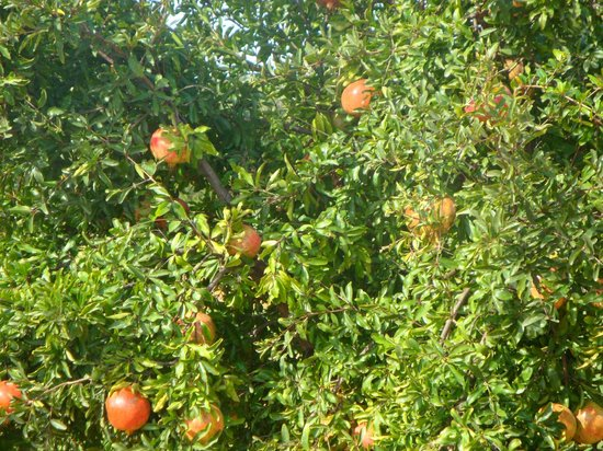 Quinta dos Poetas: jardim