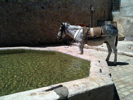 Casa Rural Andrea: Fuente nueva