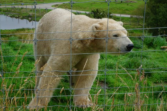 Highland Wildlife Park: Walker again