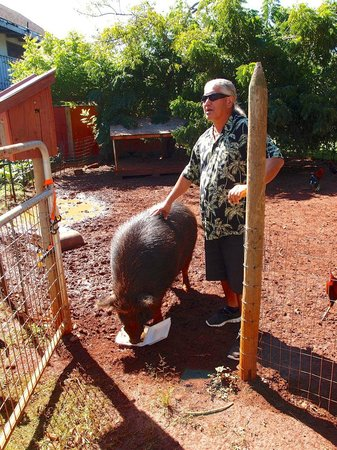 Best of Kauai Tour : Domi the guide and Omar, his Wild Boar.