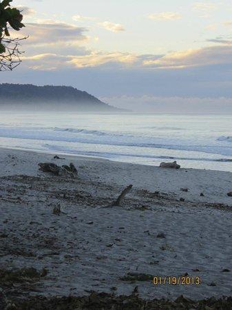 Blue Surf Sanctuary:                   the beach