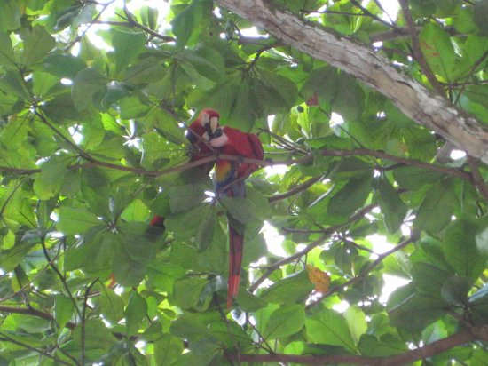 إل ريمانسو لودج:                   Macaw parrots                 