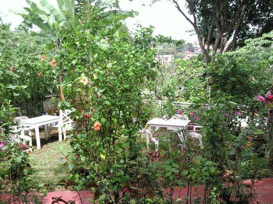 Cafe de Yaounde : Toutes les plants son surveillés par son propriétaire, M. Alfonso.