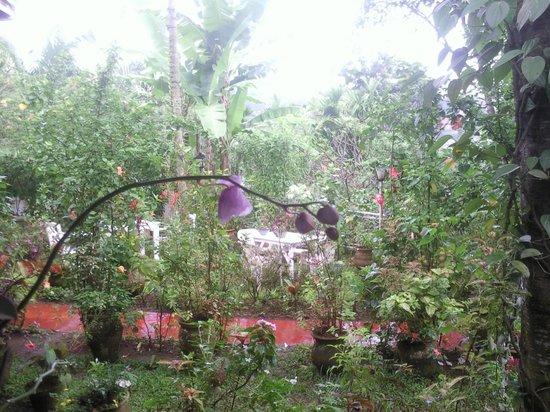 Cafe de Yaounde : La forêt en ville.