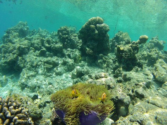 Constance Moofushi: island reef