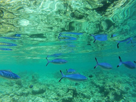 Constance Moofushi: snorkeling around the island