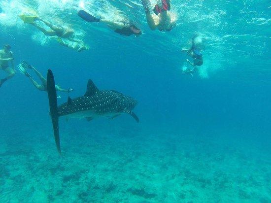 Constance Moofushi: whale shark trip