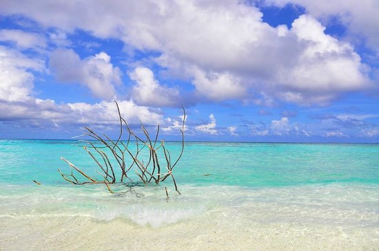 Constance Moofushi: Desert island on the whale shark trip