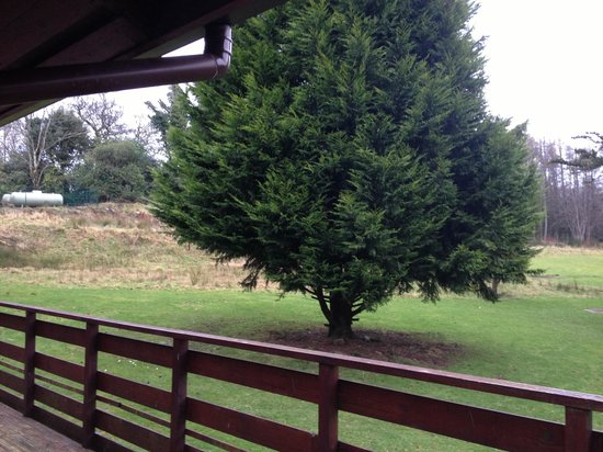 Conifers Leisure Park:                   Decking view