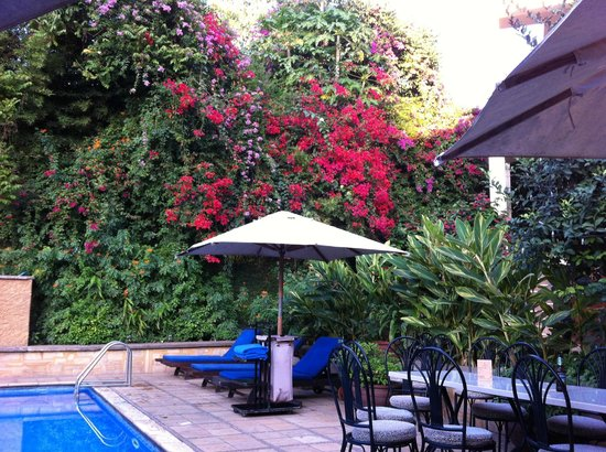 The African Tulip: The pool is a great place for having a drink and watching local birds.