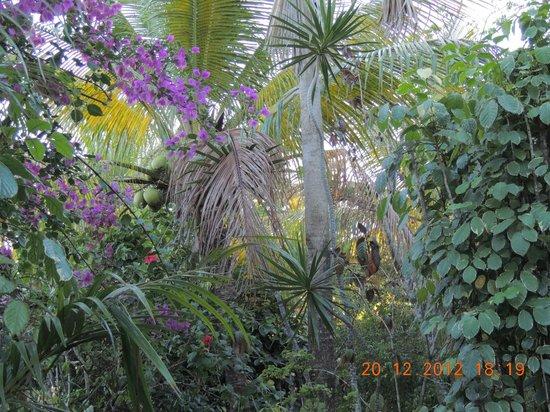 Pousada Colibri:                   jardim