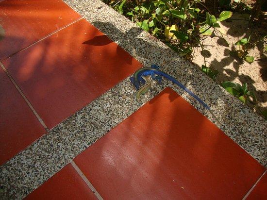 Decameron San Luis: Lizard