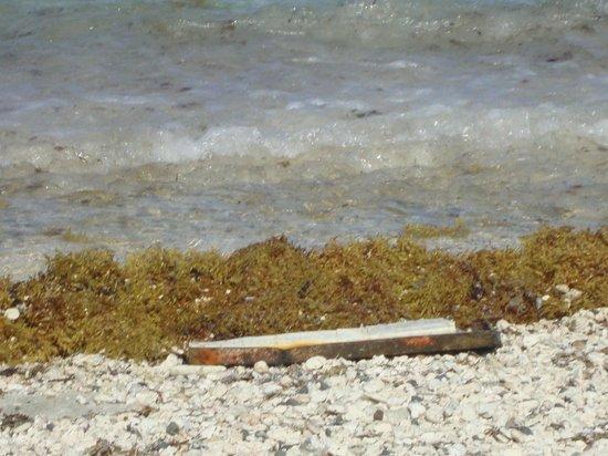 Decameron San Luis: beach