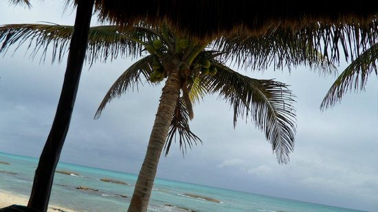 El Dorado Casitas Royale, by Karisma:                   lots of plam trees everywhere...just beautiful.
