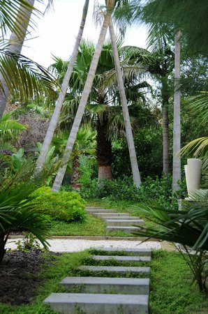 Palms Bistro and Venue: Native jungle