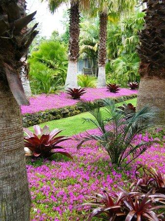 "Palms Bistro and Venue: Planting of ""Spanish Shawl"""