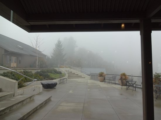 WillaKenzie Estate :                   Foggy view