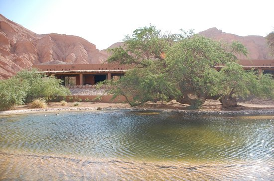 Alto Atacama Desert Lodge & Spa: La laguna (con patos)