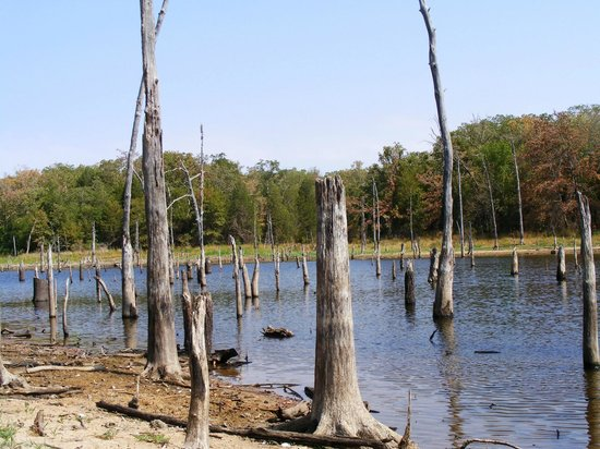 Purtis Creek State Park (Eustace) - 2019 All You Need to