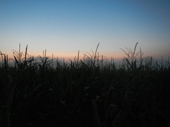 Antietam National Battlefield: Sunrise in the Cornfield
