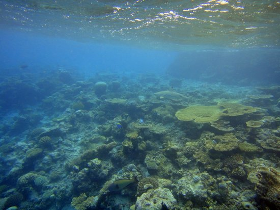 Baros Maldives: ホテル周辺の海の中はこんなかんじ