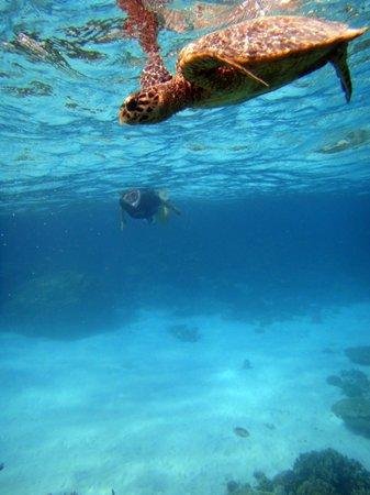 Baros Maldives: 初めてのシュノーケリングで亀に会いました(ライトハウスの近く)