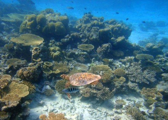 Baros Maldives: ホテル周辺