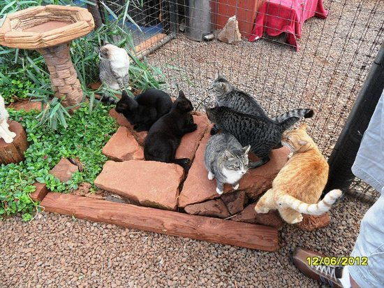 Lanai Cat Sanctuary: Getting to know you