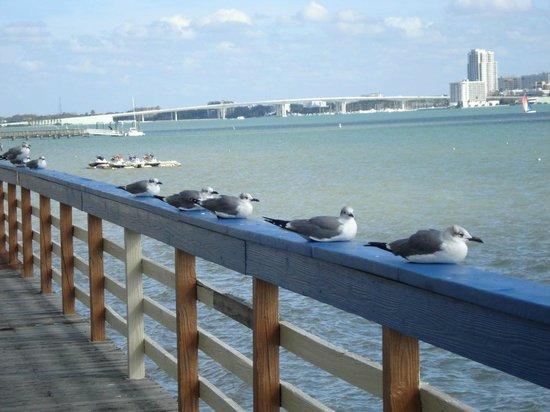 Backwater's on Sand Key: Backwater's neighbors