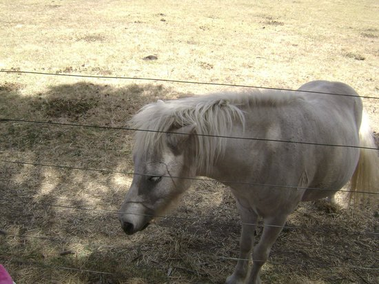 Myuna Farm: Say hi to the shetlands